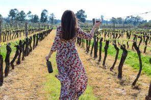 Una tra le più belle realtà campane: Villa Matilde Vini