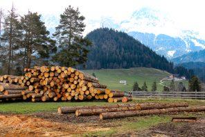 Alto Adige: itinerario di gusto tra speck, formaggio e mele